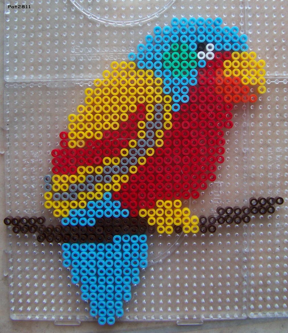 modele perle a repasser perroquet
