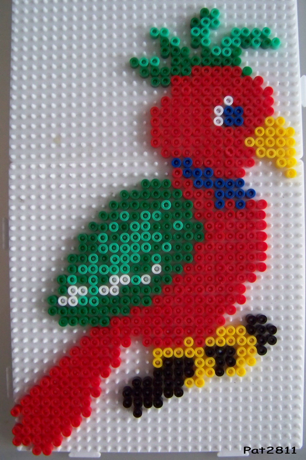 perle a repasser perroquet